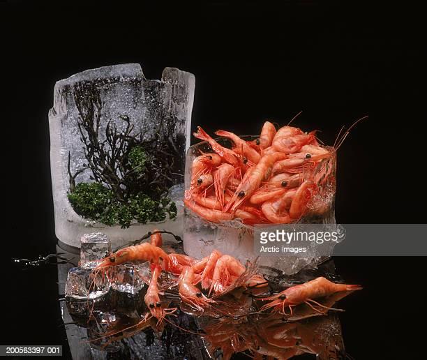 Shrimp on ice, close-up