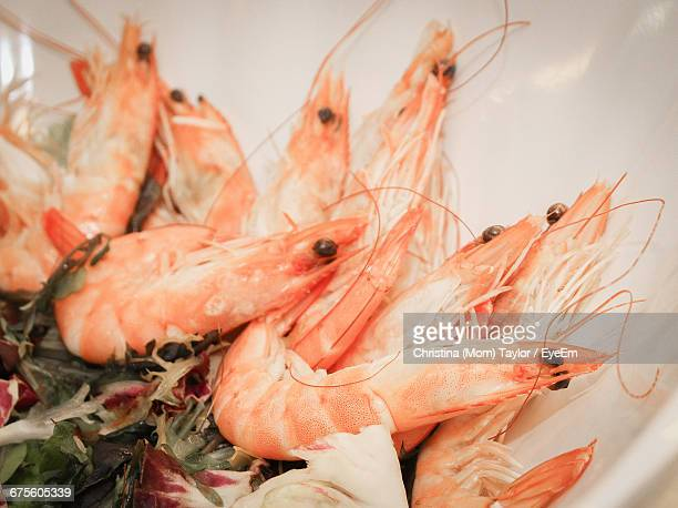 Shrimps In Plate