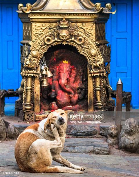 Shrine For Ganesh, Kathmandu, Nepal