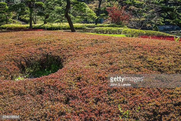 Shrub Formation at Imperial Palace East Gardens made up of the Honmaru and Ninomaru areas of Edo Castle None of the Edo Castle buildings remain today...