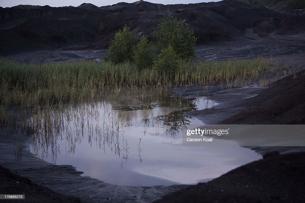Shrubs are in an oasis in a lignite coal mine at dusk in the Welzow open-pit lignite coal mine on August 10, 2013 near Welzow, Germany. The mine, operated by Vattenfall, is one of several in the immediate area that feed a nearby power plant with coal. In a development project initiated by state government, other nearby former open-pit mines have been turned into lakes in a rejuvenation effort that is also intended to make the area a viable tourist destination.