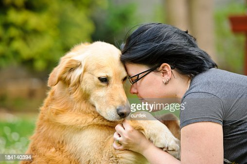 Shy dog : Stock Photo