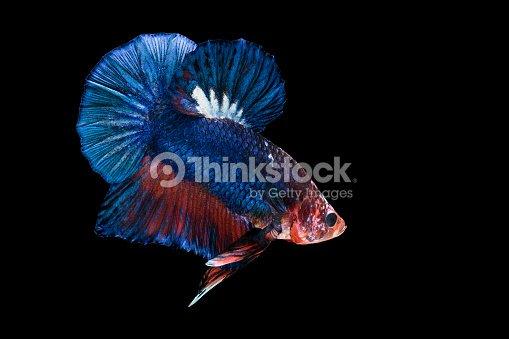 hintergrundbilder fisch schwarzer hintergrund - photo #6