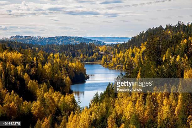 Siberian autumn forest