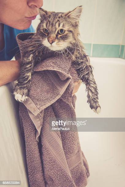 Siberian forest cat  having a bath