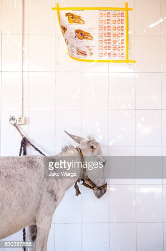 Sick donkey in animal clinic, Luxor, Egypt