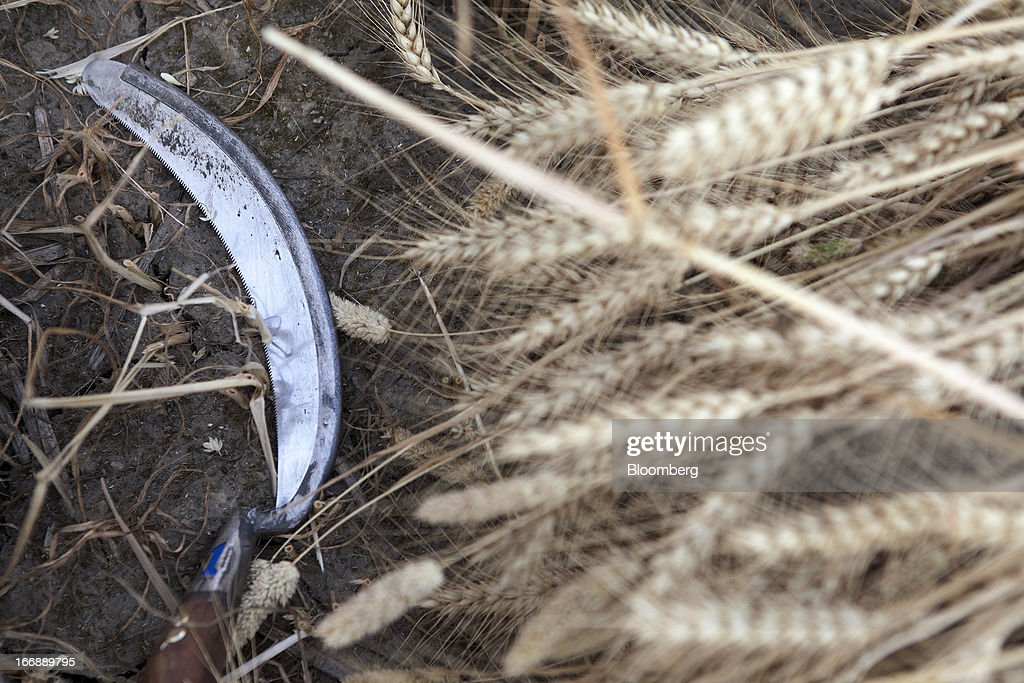A sickle lies on the ground next to harvested wheat in the district of Jalandhar in Punjab, India, on Tuesday, April 16, 2013. Wheat harvest in India, the second-biggest grower, may reach a record for a sixth straight year after farmers increased use of high-yielding seeds and winter rains boosted crop prospects, a state-run researcher said. Photographer: Prashanth Vishwanathan/Bloomberg via Getty Images