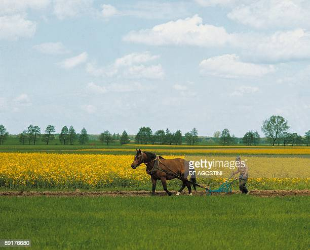 Side profile of a man tilling farms with a horse Poland