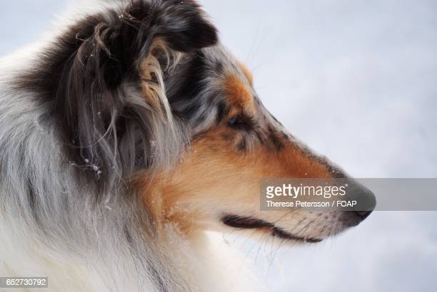 Side view of a dog