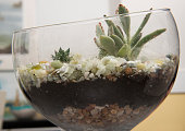 Side view of a finished doityourself terrarium using pea gravel potting soil succulents a rock and a goldpainted hippo in Ashburn VA on January 12...