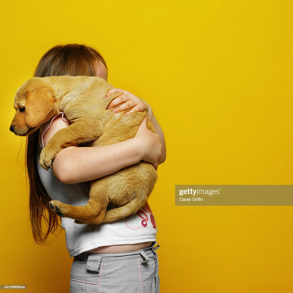 side view of a girl (6-7) holding a Labrador puppy : Stock Photo