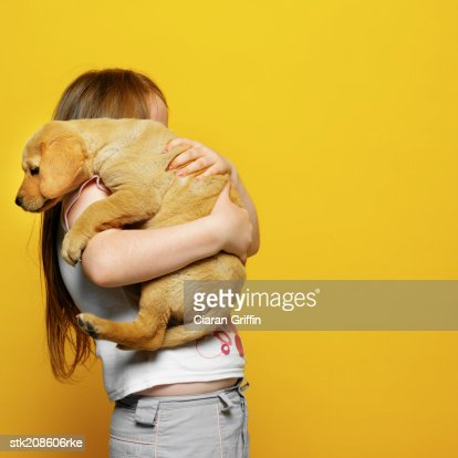side view of a girl (6-7) holding a Labrador puppy : Photo