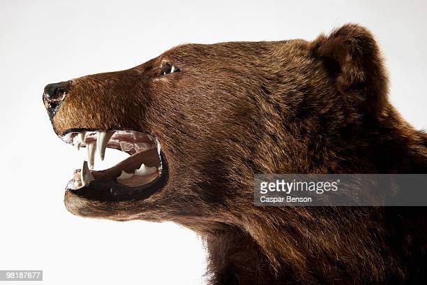 Side view of a stuffed bear head