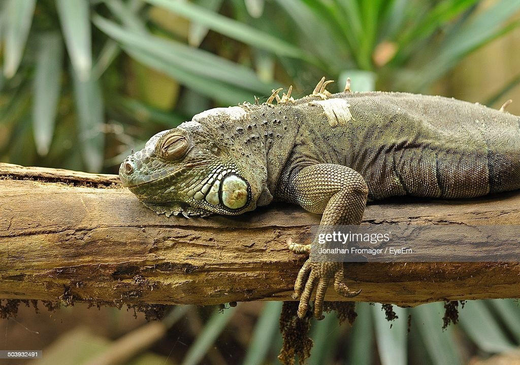 literally a bump on a log nap time photo album getty images