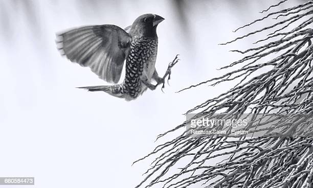 Side View Of Bird In Mid-Air