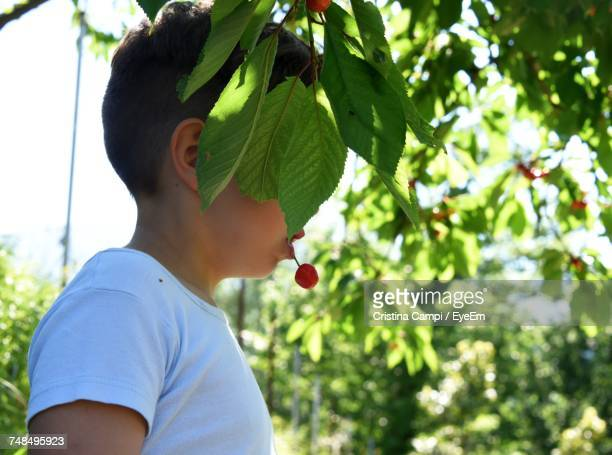 Side View Of Boy With Cherry In Mouth At Farm