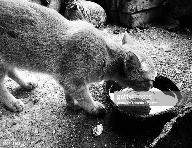 Side View Of Cat Drinking Water Outdoors