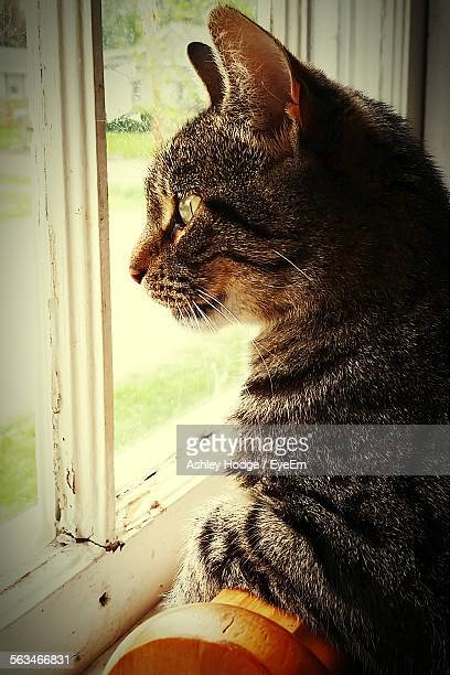 Side View Of Cat Looking Through Window