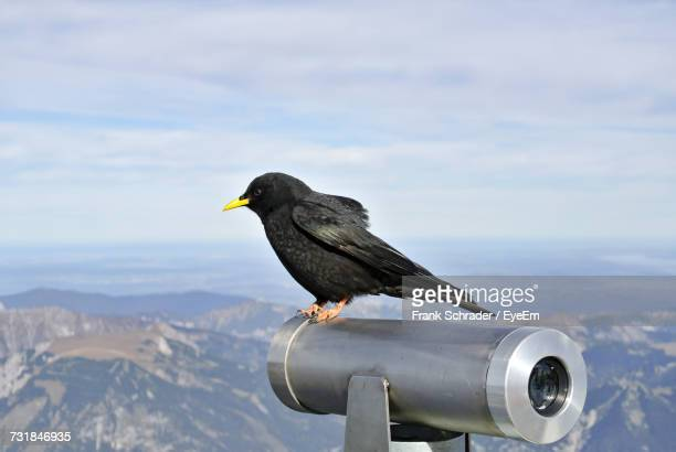 Side View Of Crow Perching On Binocular Against Sky At Observation Point