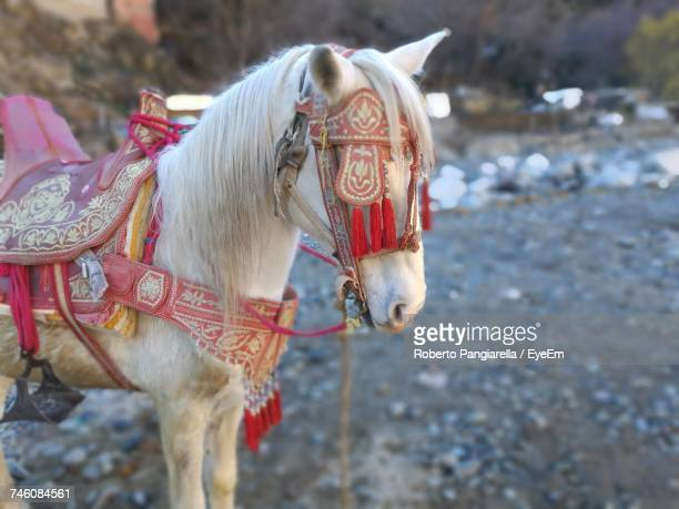 Side View Of Decorated Horse Standing On Field