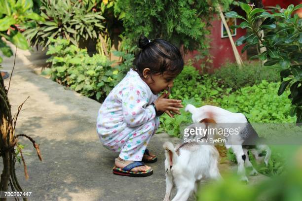 Side View Of Girl With Goat Kids On Footpath