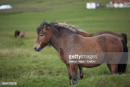 Side View Of Horses On Grassy Field