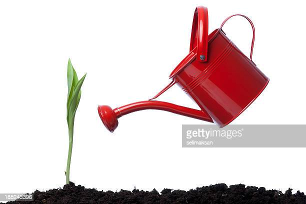 Side View Of red Watering Can Leaning On Green Plant