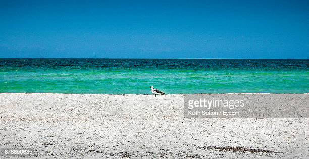 Side View Of Seagull At Sandy Beach