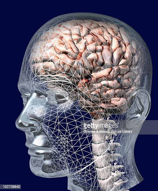 human brain stock photos and pictures | getty images, Human body