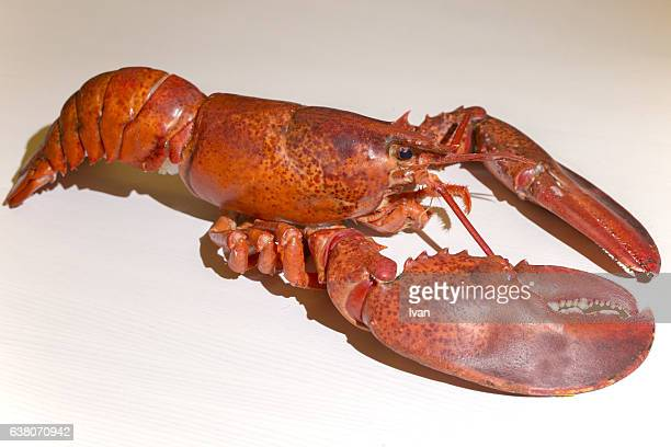 Side View of Whole Cooked Lobster