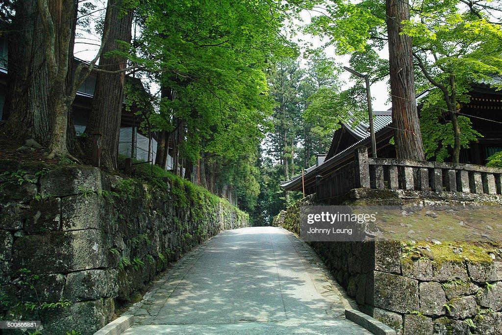 Sidewalk Covered by Trees in Japan