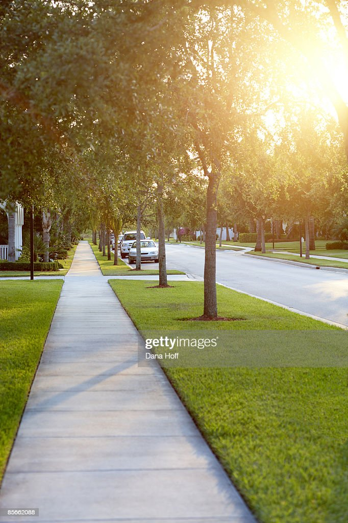 Sidewalk on tree-lined street : Stock Photo