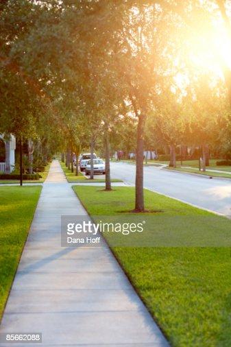 Sidewalk on tree-lined street : Stock Photo