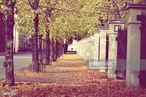 Sidewalk with trees and leaves