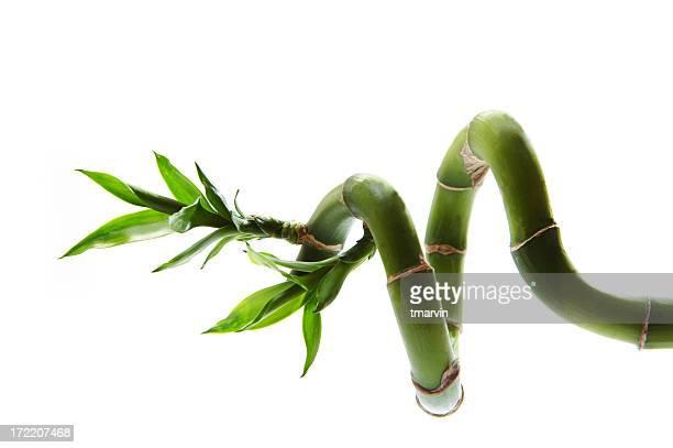 Sideways bamboo