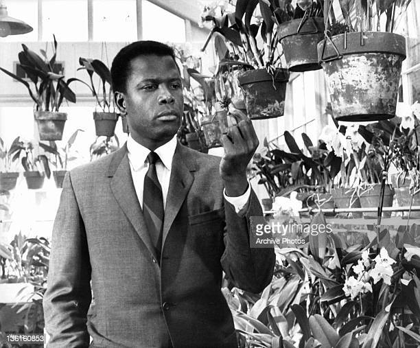 Sidney Poitier in a greenhouse examining an unidentified type of plant in a scene from the film 'In The Heat Of The Night' 1967