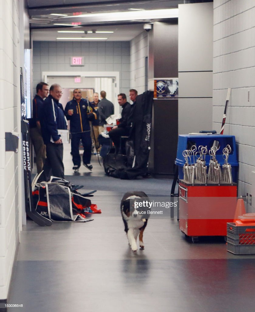 Sidney, the dog named after Sidney Crosby, and owned by Buffalo Sabres owner Terry Pegula, takes a stroll through the lockeroom area during the morning skate prior to the USA Hockey All-American Prospects Game at the First Niagara Center on September 29, 2012 in Buffalo, New York.