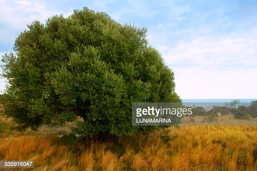 Sierra de Irta in Castellon province with sea view : Stock Photo