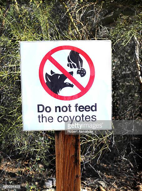 A sign at the ArizonaSonora Desert Museum in Saguaro National Park near Tucson Arizona asks visitors not to feed any coyotes that might venture into...