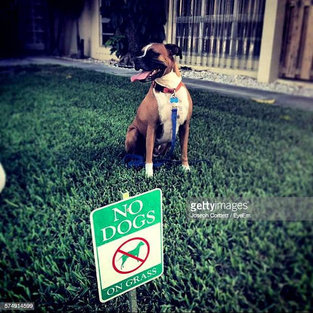 Sign Board And Boxer On Grassy Field