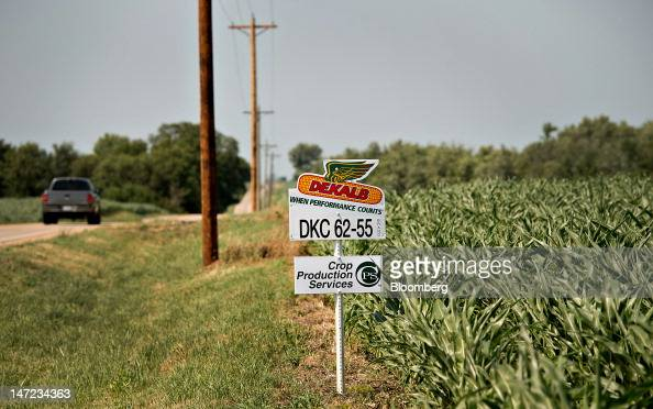 A sign for DeKalb seed corn a brand of Monsanto Co stands near a corn field in Princeton Illinois US on Wednesday June 27 2012 Monsanto Co the...