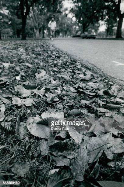Sign Of Autumn Growing Pile Up On The Ground better grip on the area Physicalfitness buffs who use the park for their exercising also will find the...