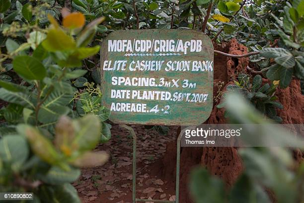 Sign to mark the plants in the Cashew Research Station in Wenchi on September 06 2016 in Wenchi Ghana