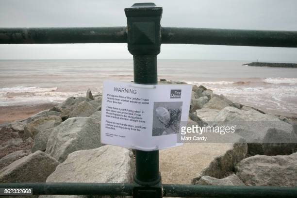 A sign warns of Jellyfish that have been washed up on Sidmouth beach by yesterday's exhurricane Ophelia in Sidmouth on October 17 2017 in Devon...