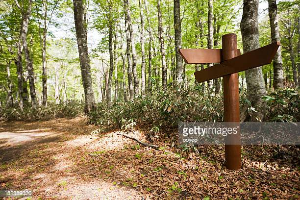 Signpost in a beech forest