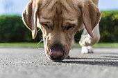Un perro busca un rastro en la calle