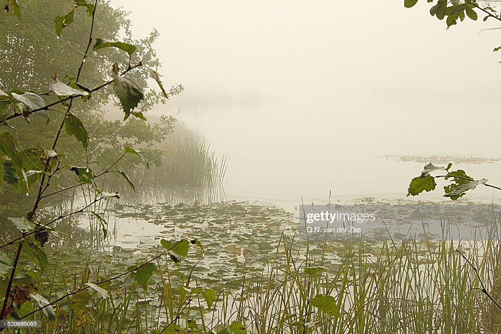Silence in the mist