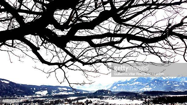 Silhouette Bare Tree Against Clear Sky During Winter