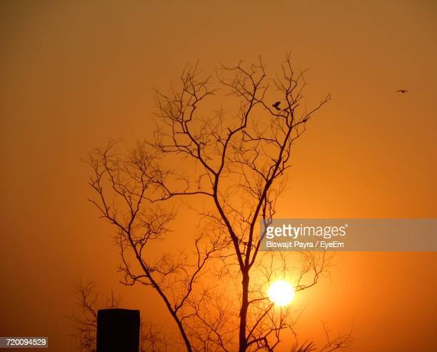 Silhouette Bare Tree Against Orange Sky