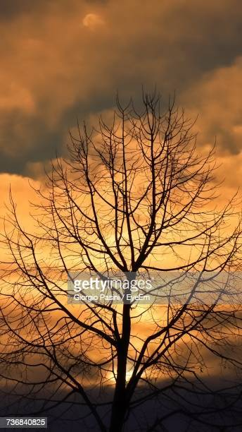 Silhouette Bare Tree Against Sky During Sunset
